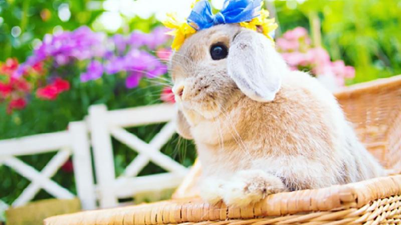 生得美又超會打扮!兔兔公主的帽子派對超夢幻
