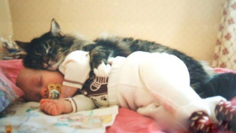 史上最萌《貓咪保母》,照顧小孩對喵星人來說是輕而易舉!