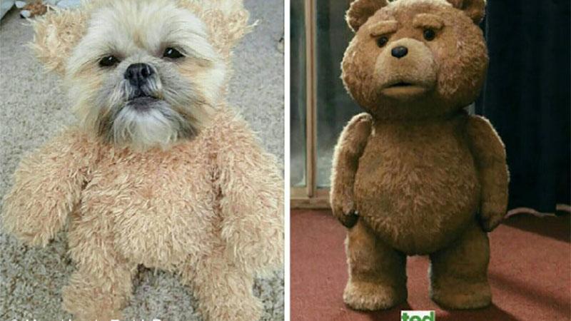 「熊麻吉」出現在現實生活?!我也好想和牠做朋友啊