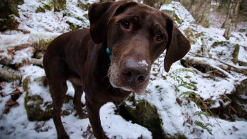 獸醫診斷只剩六個月,他帶截肢愛犬擺脫病魔遠走高飛
