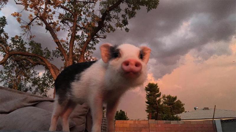 怎麼老是被你的招牌粉紅豬鼻吸引,不管怎麼照怎麼看那副可愛的粉紅色鼻子總會成為亮點啦!