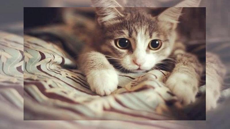 10大要點讓你首次養貓就上手
