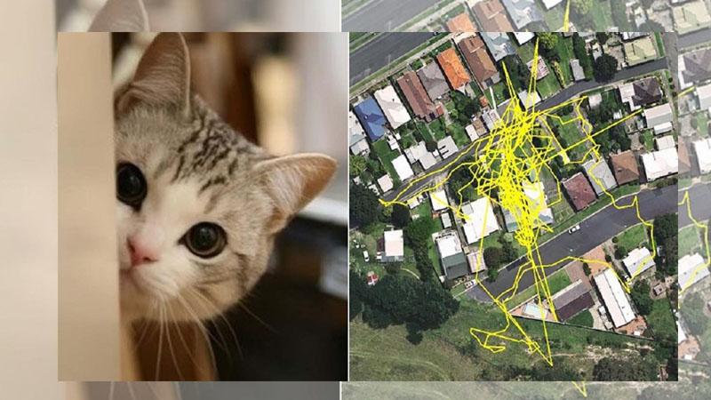 喵星人的夜間探險! 用GPS追蹤愛貓深藏不露的秘密