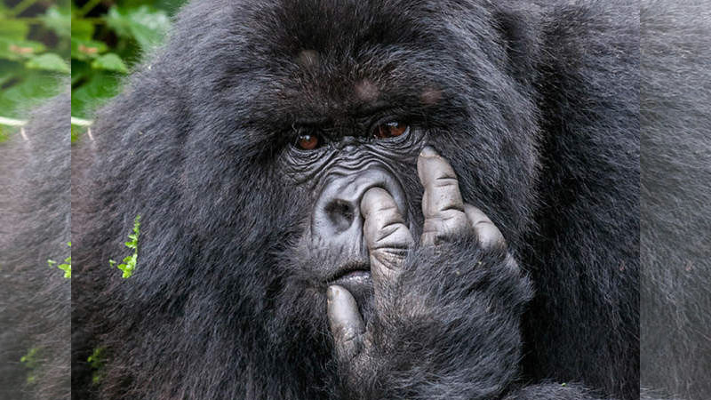 「野生動物」幽默照片 笑點有沒有這麼低啊?