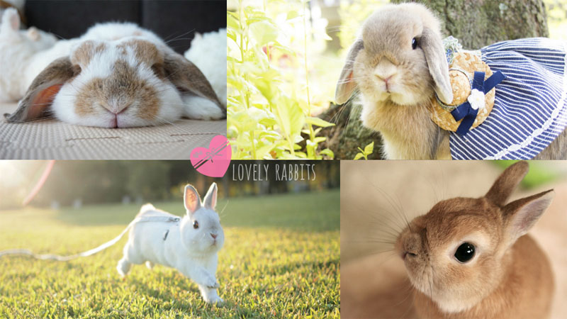 萌萌的兔子真的好療癒唷!東京「兔兔攝影展」開鑼啦~人氣兔子全召集