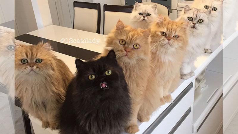 家有12喵!看來貓咪印表機的墨水不太夠啦٩(ΦωΦ)۶!