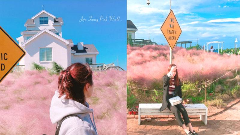 置身夢幻的粉紅草原!濟州咖啡廳秋冬限定的浪漫美景〜