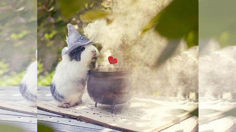 這根本是少女的夢境吧!小清新天竺鼠Mieps攝影集