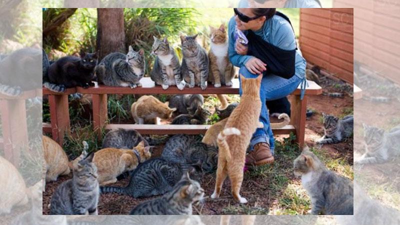貓奴必去的《夏威夷度假勝地》,享受被貓包圍的愉悅快感!