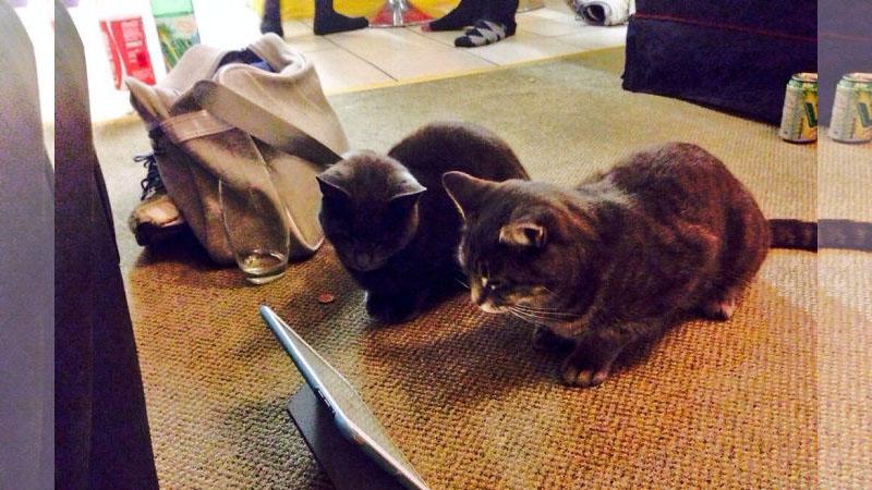 ♪太天真了人類!家裡明明沒養貓...但牠們都不請自來!